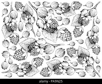 Berry Fruits, Illustration Wallpaper of Hand Drawn Sketch Delicious Fresh Golden Himalayan Raspberries or Rubus Ellipticus Fruits Isolated on White Ba - Stock Photo