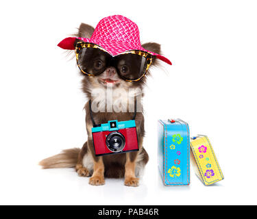chihuahua dog looking so cool with fancy sunglasses  and photo camera ready for summer vacation, isolated on white background with luggage - Stock Photo