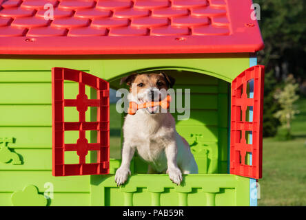 Happy dog in doghouse holding toy bone in mouth - Stock Photo