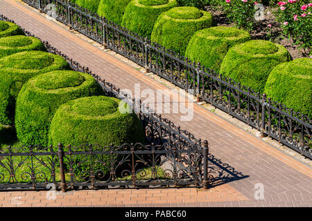 geometrically trimmed round bushes in landscape design - Stock Photo