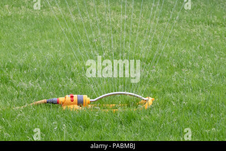 Sprinkler attached to a yellow hose being used to water a grass lawn - Stock Photo