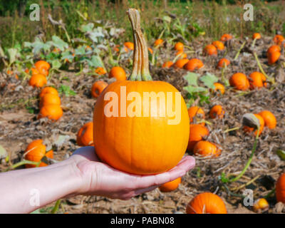 A girl holds a small pumpkin in her hand. - Stock Photo