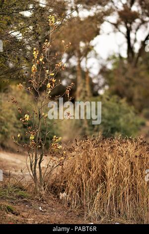 dry small tree and grass in autumn - Stock Photo