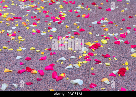 Rose petals scattered on the floor - Stock Photo