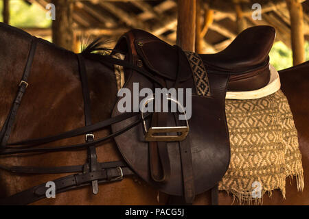 Leather saddle on polo horse. This young animal is resting in the stables before an important tournament - Stock Photo