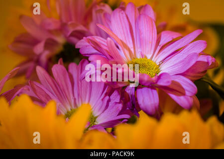 Clsoe-up of flowers filling frame - Stock Photo