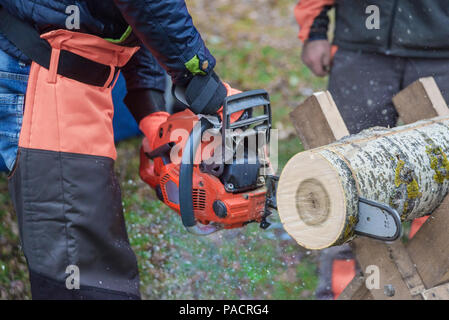 Dangerous work: professional woodcutter in protective overalls saws a log of wood, lying on a stand, with a chainsaw, close-up - Stock Photo
