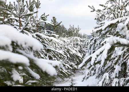 snow photographed in the winter season, which appeared after a snowfall, close-up, - Stock Photo