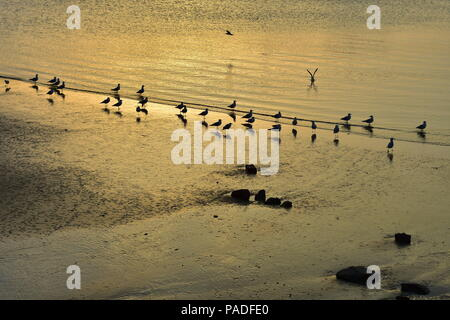 Seagulls on sandy beach turned golden in late evening light. - Stock Photo
