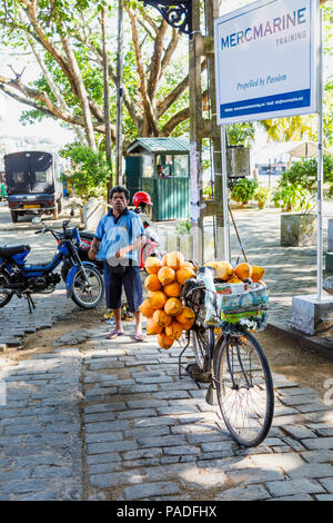 Local lifestyle: Bicycle loaded with yellow king coconuts for sale on the roadside in historic Galle Fort, Galle, Southern Province, Sri Lanka - Stock Photo