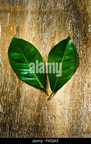 conceptual still life of two leaves facing each other - Stock Photo
