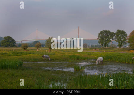 horses grazing in field with view of Pont de Brotonne (Brotonne Bridge) crossing the River Seine, Seine Maritime, north Normandy, France - Stock Photo