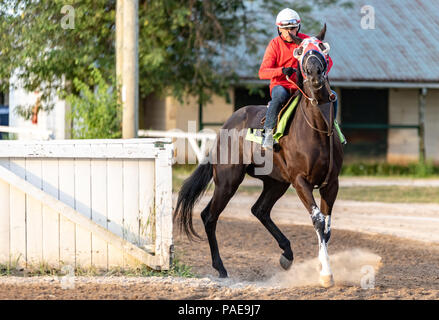 An early morning workout at Fort Erie Racetrack the week before the Prince of Wales Stakes. - Stock Photo