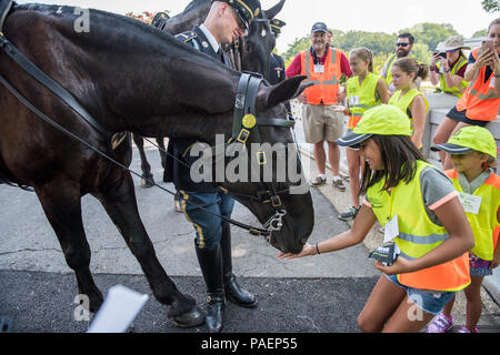 A Children's Program volunteer feeds peppermints to Luke, a horse from The 3d U.S. Infantry Regiment (The Old Guard) Caisson Platoon, near Section 46 of Arlington National Cemetery, Arlington, Virginia, July 16, 2018. Over 400 volunteer landscape professionals participated in the National Association of Landscape Professionals' 22nd annual Renewal and Remembrance event at Arlington National Cemetery. Volunteers aerated turf, planted flowers, laid irrigation pipes, and installed lighting protection on several trees. (U.S. Army photo by Elizabeth Fraser / Arlington National Cemetery / released) - Stock Photo
