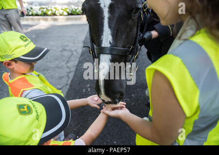 Children's Program volunteers feed Luke, a horse from The 3d U.S. Infantry Regiment (The Old Guard) Caisson Platoon, peppermints near Section 46 of Arlington National Cemetery, Arlington, Virginia, July 16, 2018. Over 400 volunteer landscape professionals participated in the National Association of Landscape Professionals' 22nd annual Renewal and Remembrance event at Arlington National Cemetery. Volunteers aerated turf, planted flowers, laid irrigation pipes, and installed lighting protection on several trees. (U.S. Army photo by Elizabeth Fraser / Arlington National Cemetery / released) - Stock Photo