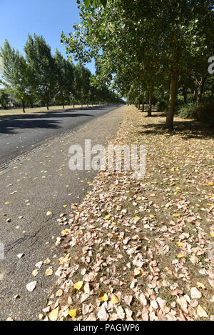 Finsbury Park, London, UK. 23rd July 2018. Dry grass and leaves in Finsbury Park during the heatwave. Credit: Matthew Chattle/Alamy Live News - Stock Photo