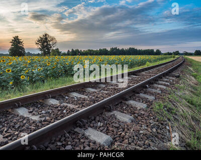 Field of  sun flower next to  the railroad tracks during the sunset - Stock Photo
