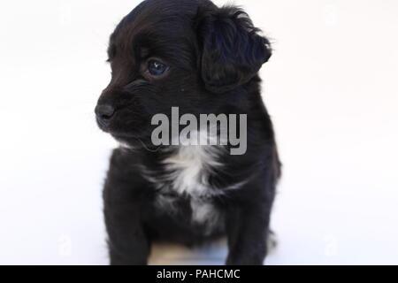 Female mongrel puppy - Stock Photo