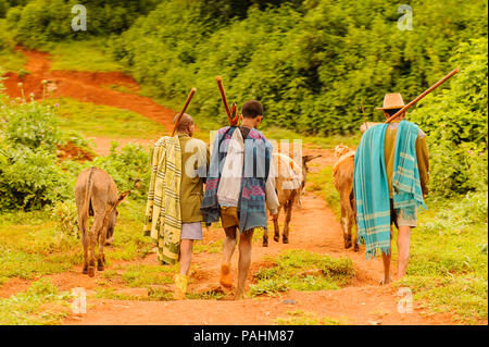 OMO, ETHIOPIA - SEPTEMBER 19, 2011: Unidentified Ethiopian boys with donkeys. People in Ethiopia suffer of poverty due to the unstable situation - Stock Photo