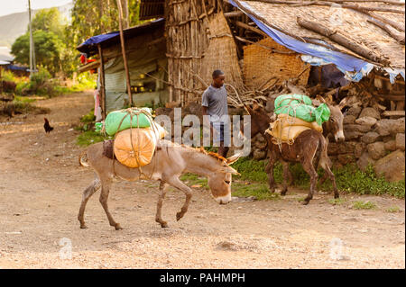OMO, ETHIOPIA - SEPTEMBER 19, 2011: Unidentified Ethiopian man with donkeys. People in Ethiopia suffer of poverty due to the unstable situation - Stock Photo