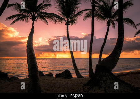 Palms silhouettes on a tropical beach at sunset, Dominican republic, bahamas, cuba, barbados, thailand.mexico - Stock Photo