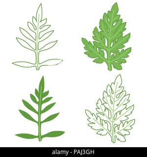 Ragweed leaves illustration set, colored and outline - Stock Photo
