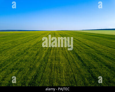 Aerial drone view of green field, expanses of Russia - Stock Photo