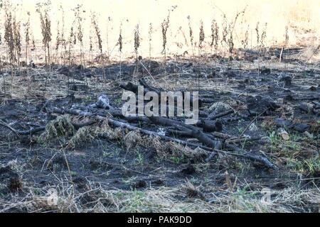 London, UK. 23rd July 2018. Burnt wood from a grass fire on Woolwich Common where twenty fire engines and around 125 firefighters are in attendence. Credit : Claire Doherty/Alamy Live News - Stock Photo