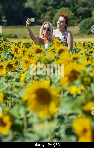 Ickleford, UK.  24 July 2018.  Kim Strelly (L) and Molly Mahoney (R), from London, take a selfie at Hitchin Lavender farm amongst sunflowers during the continuing heatwave.  Currently in full bloom, the lavender and colourful sunflowers attract visitors from far and wide to this popular family run farm.   Credit: Stephen Chung / Alamy Live News - Stock Photo