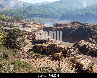 Tree logging in rural Swaziland with heavy machinery, stacked timber and forest in background, Africa. - Stock Photo