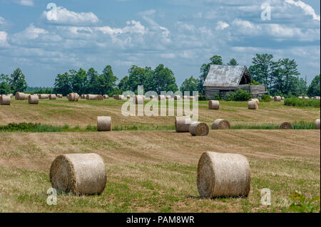 Round Hay Bales on field - Stock Photo