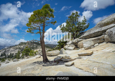 Rocky mountainside with granite boulders and alpine trees - Olmsted Point, off Highway 120 - Yosemite National Park - Stock Photo