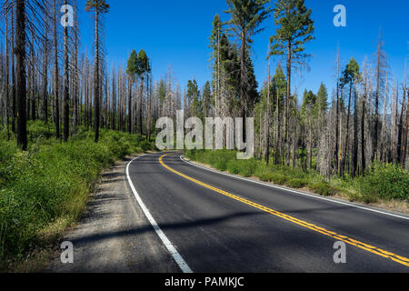 Curve in highway 120, a road full of trees damaged by the Rim Fire, a Devastating Forest Fire in 2013 - Yosemite National Park - Stock Photo