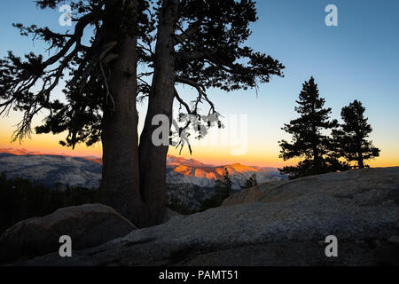 Orange Sunset Light Fading Over Pine Trees and High Sierra Peaks on the hiking trail from May Lake To Mount Hoffman - Yosemite National Park - Stock Photo