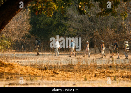 Tourists on Walking Safari. Mana Pools National Park. Zimbabwe - Stock Photo