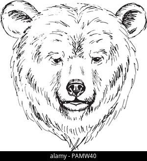 Sketch by pen of a bear  head - Stock Photo