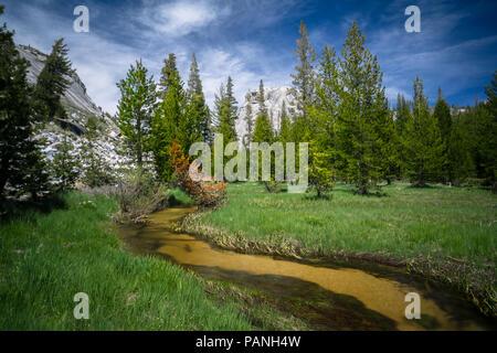 Marshy meadow landscape around Tenaya Creek,  along HIghway 120 in Yosemite National Park - Stock Photo