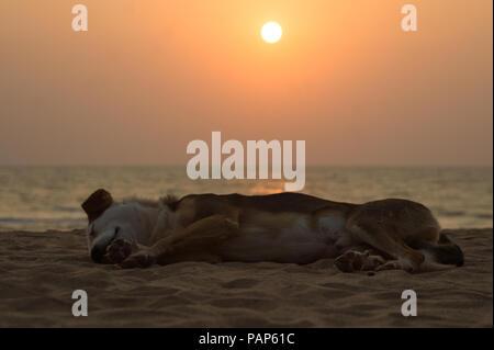 Dog sleeping peacefully on beach during beautiful orange sunset in Anjuna, Goa - India - Stock Photo