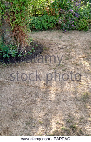Dry brown parched grass in an english garden in the 2018 summer heatwave. UK - Stock Photo