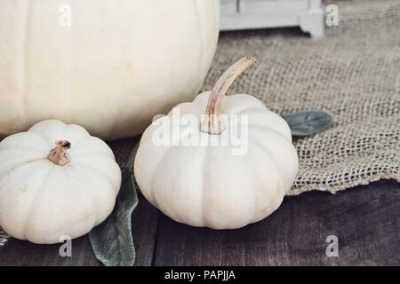 Heirloom and mini white pumpkins sitting on wooden rustic table decorated for Thanksgiving Day or Halloween. - Stock Photo