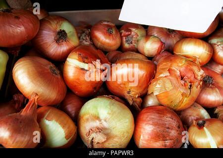 Organic fresh onion on city green market - Stock Photo