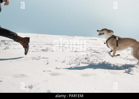Man playing with dog in winter, running in the snow - Stock Photo