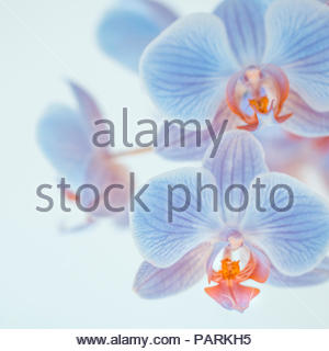 Close-up shot of vulnerable flowers - Stock Photo
