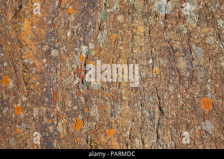 Moss on stone, colorful natural backgroung, Svartisen, Norway - Stock Photo