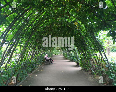 The Cradle walk at the Sunken garden, Kensington palace gardens, London, UK, GB - Lime trees. - Stock Photo