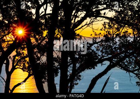 Sun bursts over distant horizon through pohutukawa tree silhouette on lower Mount Maunganui slopes brightly lit at sunrise - Stock Photo