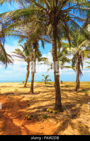 palm trees and sand growing on the ocean - Stock Photo
