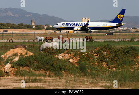 Mallorca, Spain.  25 July 2018, Mallorca, Spain: An airplane of the airline Ryanair lands at the airport Palma de Mallorca, while horses stand in the foreground on a meadow. The start of a two-day strike by cabin crew of the low-cost airline Ryanair has caused great displeasure among countless travellers in several European countries. The most cancellations occurred in Spain, Credit: dpa picture alliance/Alamy Live News - Stock Photo