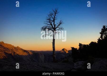 Lone pine tree silhouette with fading sunlight on Half Dome in distance - Olmsted Point, Yosemite National Park - Stock Photo
