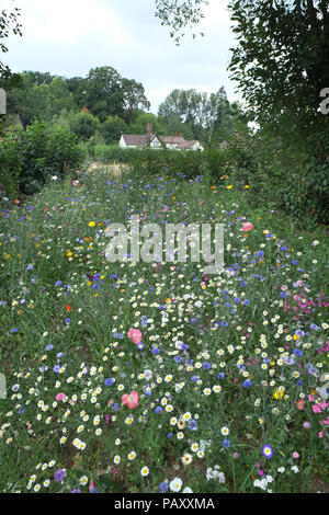 Wildflowers in an English Country garden, Shropshire. - Stock Photo